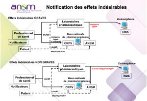 Vaccins: notification des EI à l'ANSM